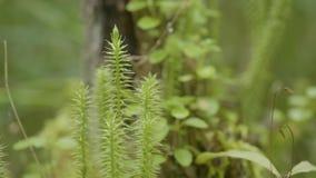 春天唤醒花和植被在森林森林植物群落 森林的本质,绿草 影视素材