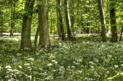 春天在下萨克森州 免版税图库摄影