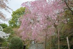 春天在京都,日本 图库摄影