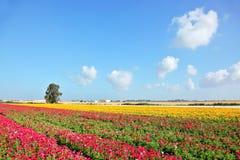 春天在以色列 图库摄影