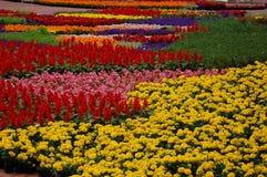春天在先驱法院大楼正方形,波特兰,俄勒冈的花显示 免版税库存照片