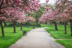 春天在公园英国 免版税库存照片