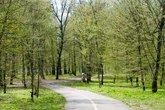 春天在公园 免版税图库摄影