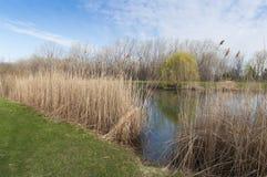 春天在公园 免版税库存图片
