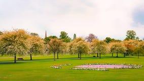 春天在公园 库存图片