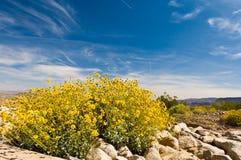 春天在内华达沙漠 免版税库存图片