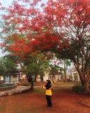 春天在印度尼西亚 库存图片