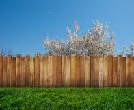 在后院和木庭院篱芭的春天树 皇族释放例证