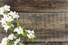 春天在土气木背景的苹果树开花 库存图片