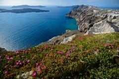 春天在圣托里尼海岛的岸开花  免版税图库摄影