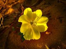 春天在地中海s附近开花开花在Poleg小河 免版税图库摄影
