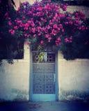 春天在埃及 库存照片