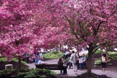 春天在城市。 图库摄影