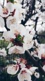 春天在城市 免版税库存图片