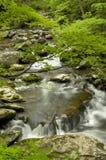 春天在大烟山国家公园的, TN美国Tremont 免版税库存照片