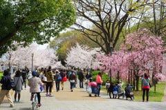 春天在大阪 图库摄影