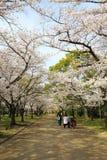 春天在大阪 免版税图库摄影