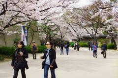 春天在大阪 库存图片