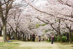 春天在大阪 库存照片