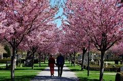 春天在天空中 免版税库存照片