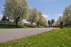 春天在宾夕法尼亚 库存照片