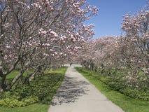 春天在尼亚加拉秋天的颜色树 加拿大 库存图片