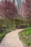 春天在庭院里 库存图片