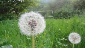 春天在德国 免版税图库摄影