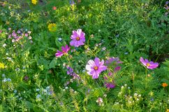 春天在我的有五颜六色的花的庭院里 免版税图库摄影