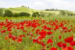 春天在托斯卡纳 免版税库存图片
