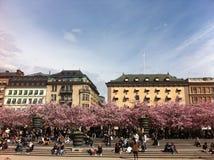 春天在斯德哥尔摩 免版税库存图片