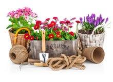 春天在有园艺工具的木桶开花 免版税库存图片