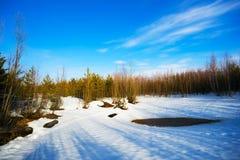 春天在有长的阴影的一块森林沼地解冻了补丁从树 免版税库存图片