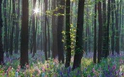春天在森林里 图库摄影
