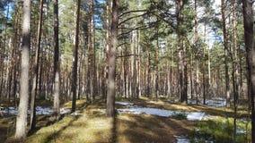 春天在森林里 库存照片