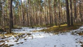 春天在森林里 免版税图库摄影