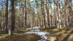 春天在森林里 免版税库存照片