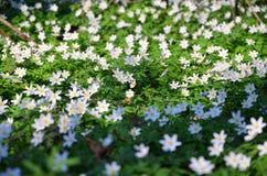 春天在森林里 库存图片