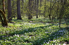 春天在森林里 免版税库存图片