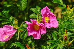 春天在植物园里 免版税库存图片