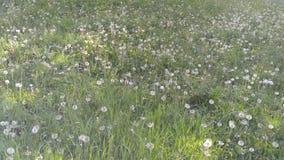 春天在沙基山的花田  免版税图库摄影