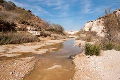水春天在沙漠 库存照片