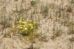 春天在沙漠3 免版税库存图片