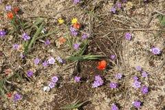 春天在沙漠6 免版税图库摄影