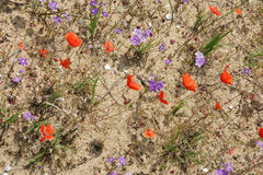 春天在沙漠5 免版税图库摄影