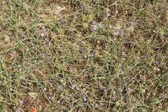 春天在沙漠1 免版税图库摄影