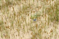 春天在沙漠0 图库摄影