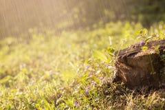 春天在清洁在雨中开花 库存照片