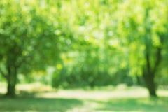 春天在焦点外面的树桦树 库存图片