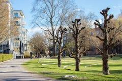 春天在瑞典 免版税图库摄影